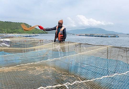 AgDevCo Invests In Kenyan Aquaculture Company Victory Farms
